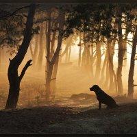 Пёсик в тумане :: Александр