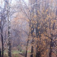November rain :: Lilittt К