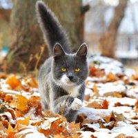 Снежная осень :: Екатерина Лещенко