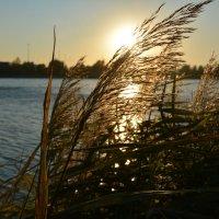 закат на озере :: Николай Провенко