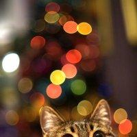 Новогодний коте :: Юлия М