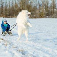Катание на собаке :: Сергей Стрижонок