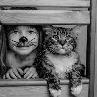 котята :: Катерина Терновая