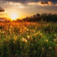 Травы закатные. :: Andrei Dolzhenko