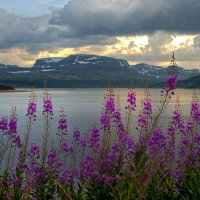 В лучах норвежского заката... :: Gala Solo