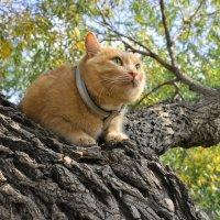 Осенний котейка :: Елена Годенко