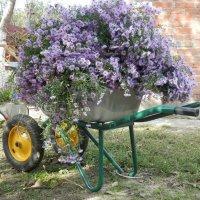 Осенние цветы :: Людмила