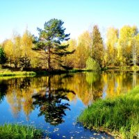 Лесное озеро. :: Юрий Толстогузов