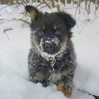 Однако холодно! :: Павлова Татьяна Павлова