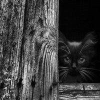 Про кота ... :: Владимир КРИВЕНКО