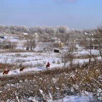 В Гадюкино зимой... :: Александр Резуненко