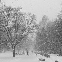 Снегопад :: Андрей Михайлин