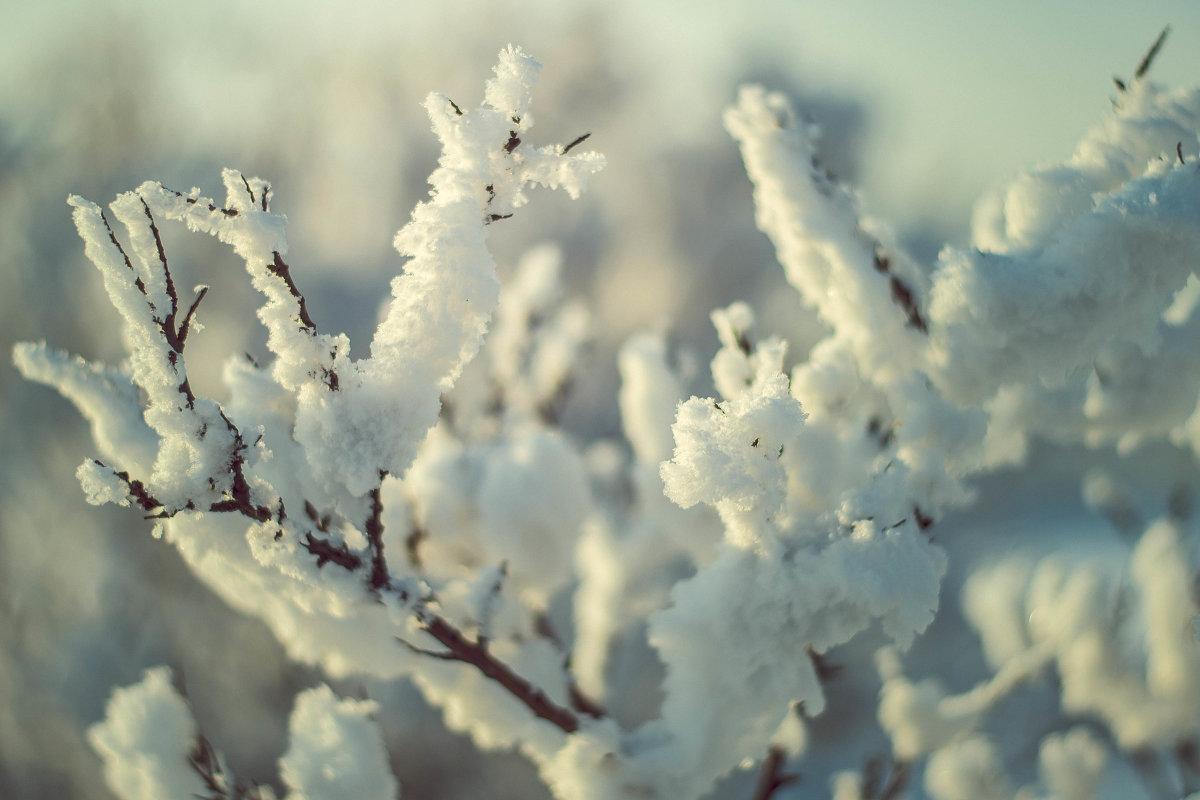 Снежный куст 1 - Юрий Крутский