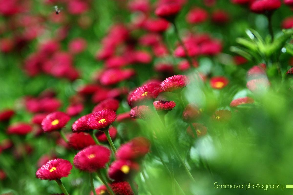 Никитский сад - Аня Смирнова