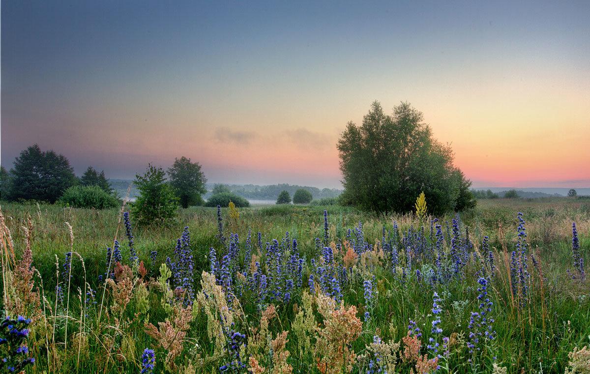 Нежное утро среди трав - Юлия Холодкова