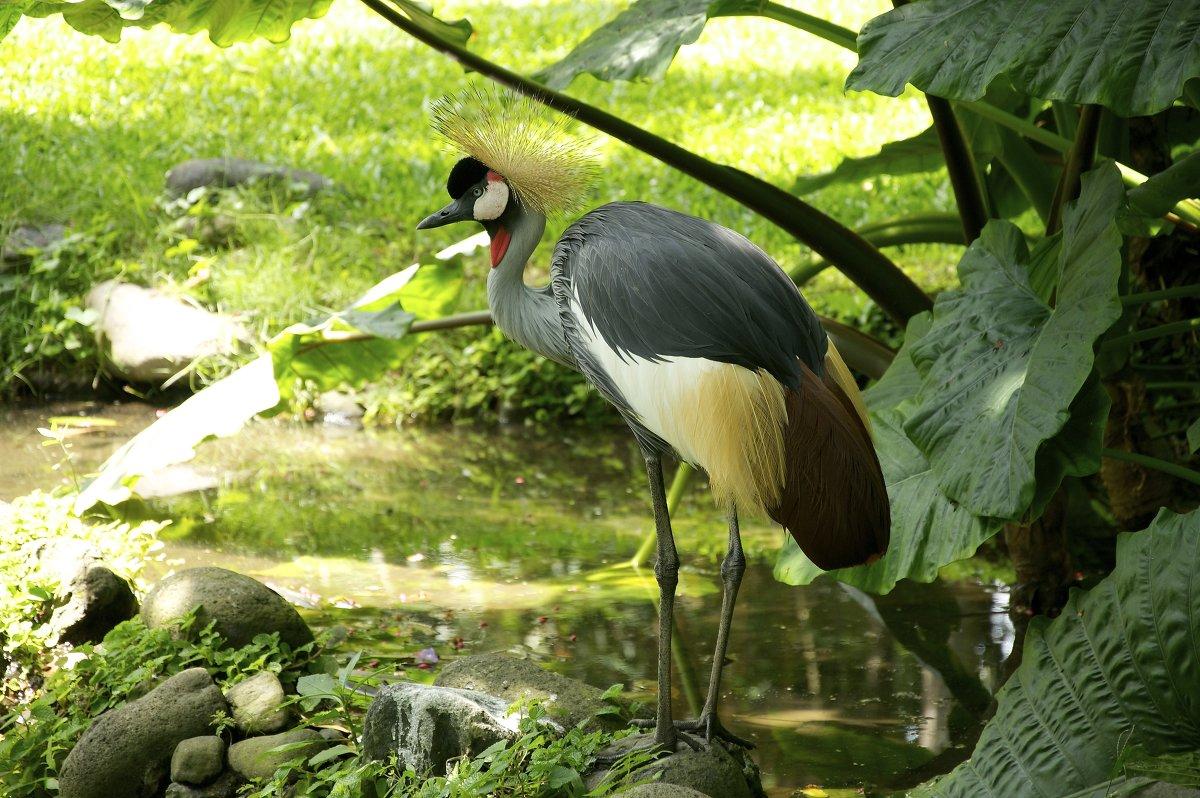 птицы Бали - Galina G