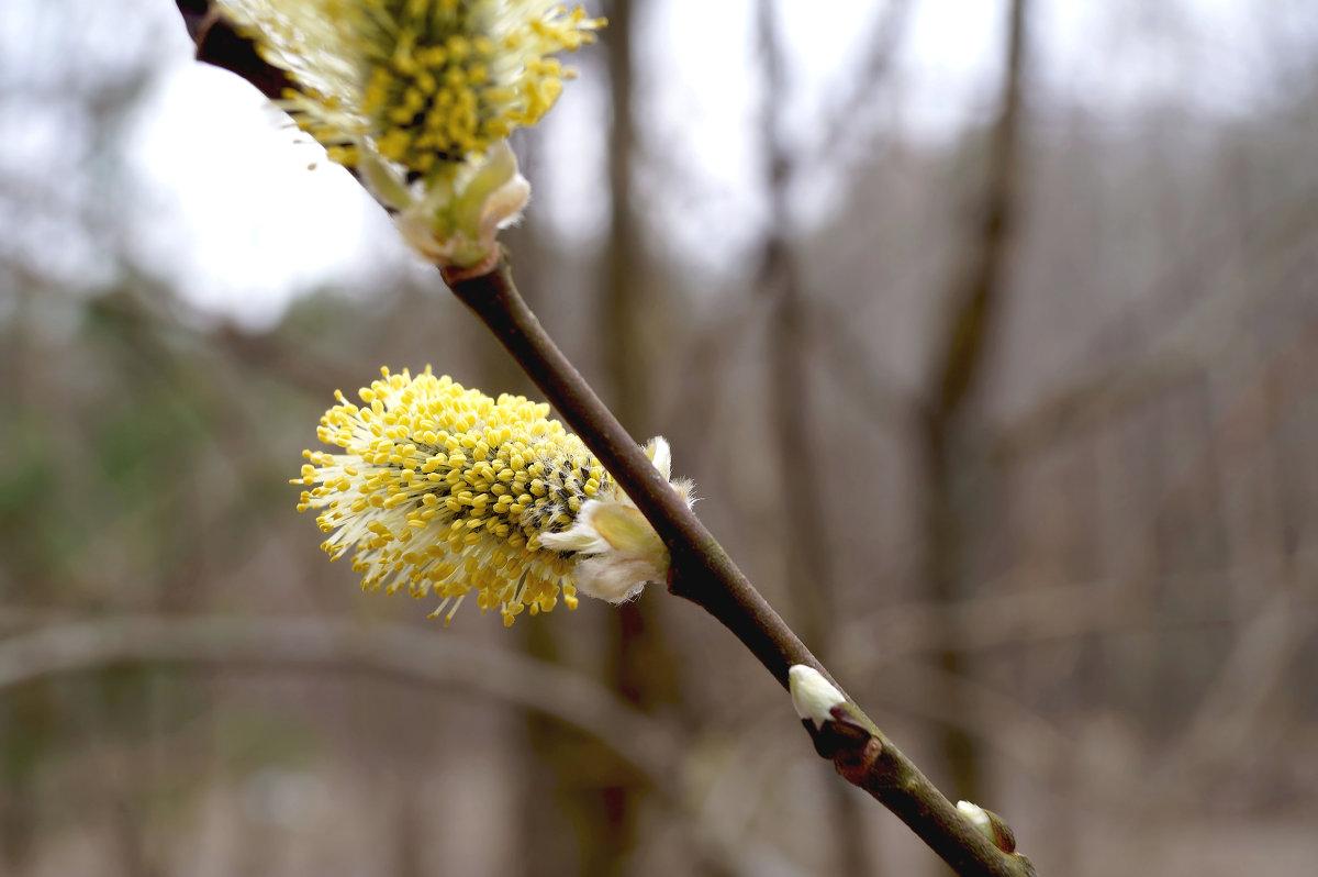 весна медленно приходит)) - елена