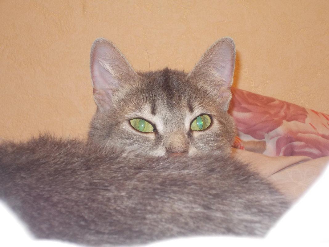 Кошка - Иван Перенец