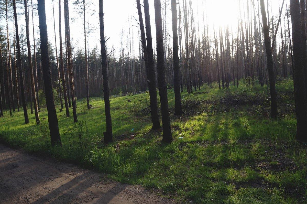 лес - Кристина Щукина