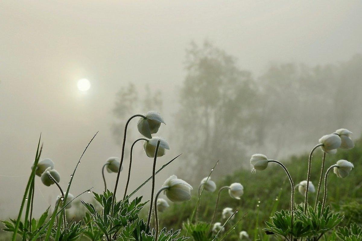 Завтра в Курской области прогнозируют туман и небольшие дожди