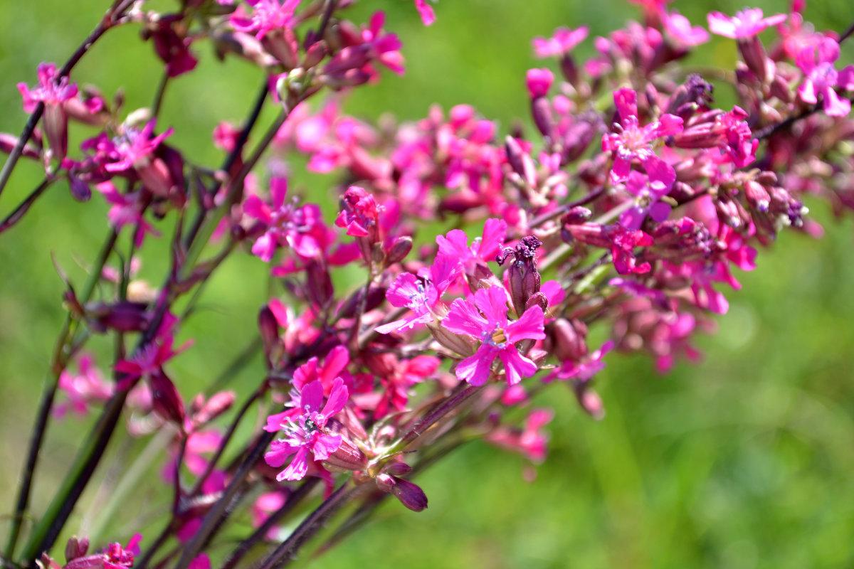 полевые цветы, полевые цветы..... - Светлана