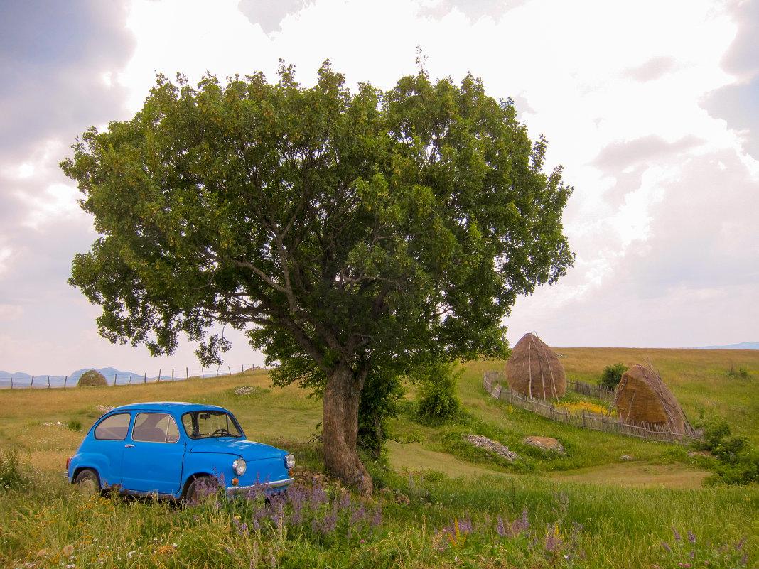 car & tree - Евгений Гришаев