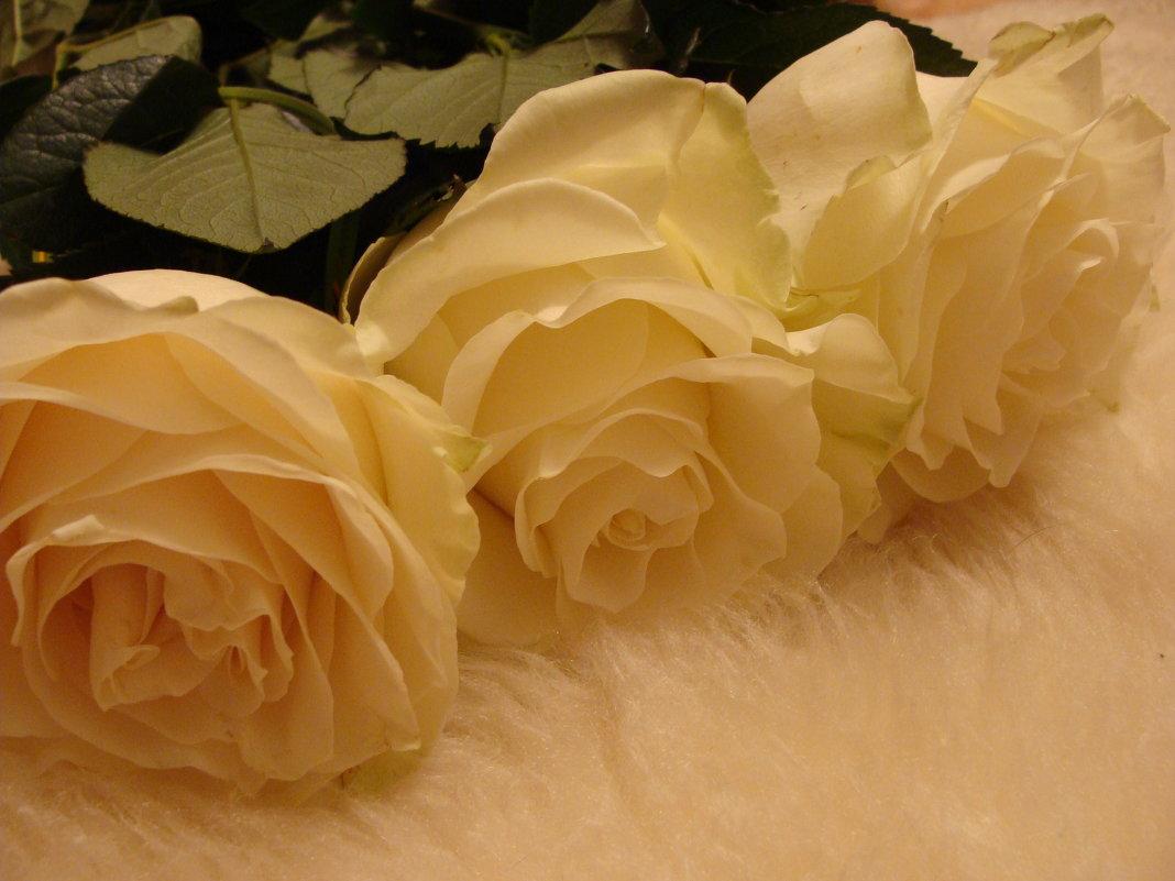 розы - Varvara Aravrav