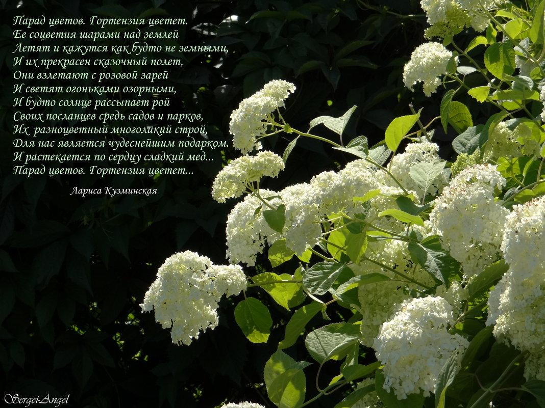 ГОРТЕНЗИЯ - SERGEI ANGEL