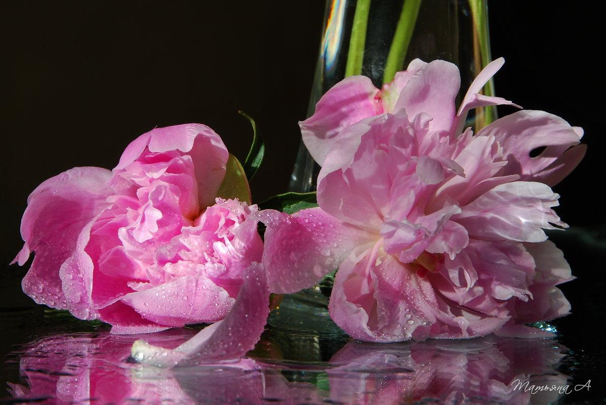 Розовая нежность Июля* - Татьяна Аистова