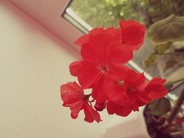 Цветок. - Екатерина