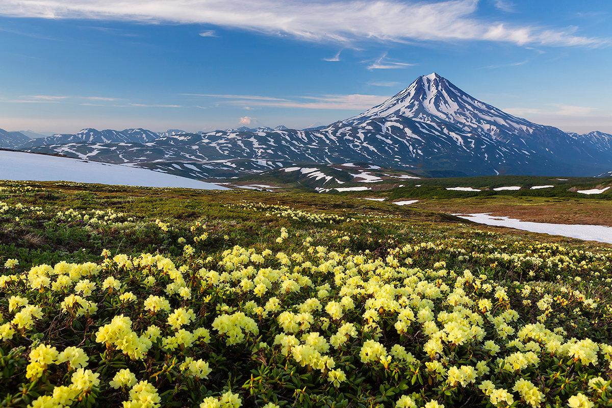 Дальний восток цветы