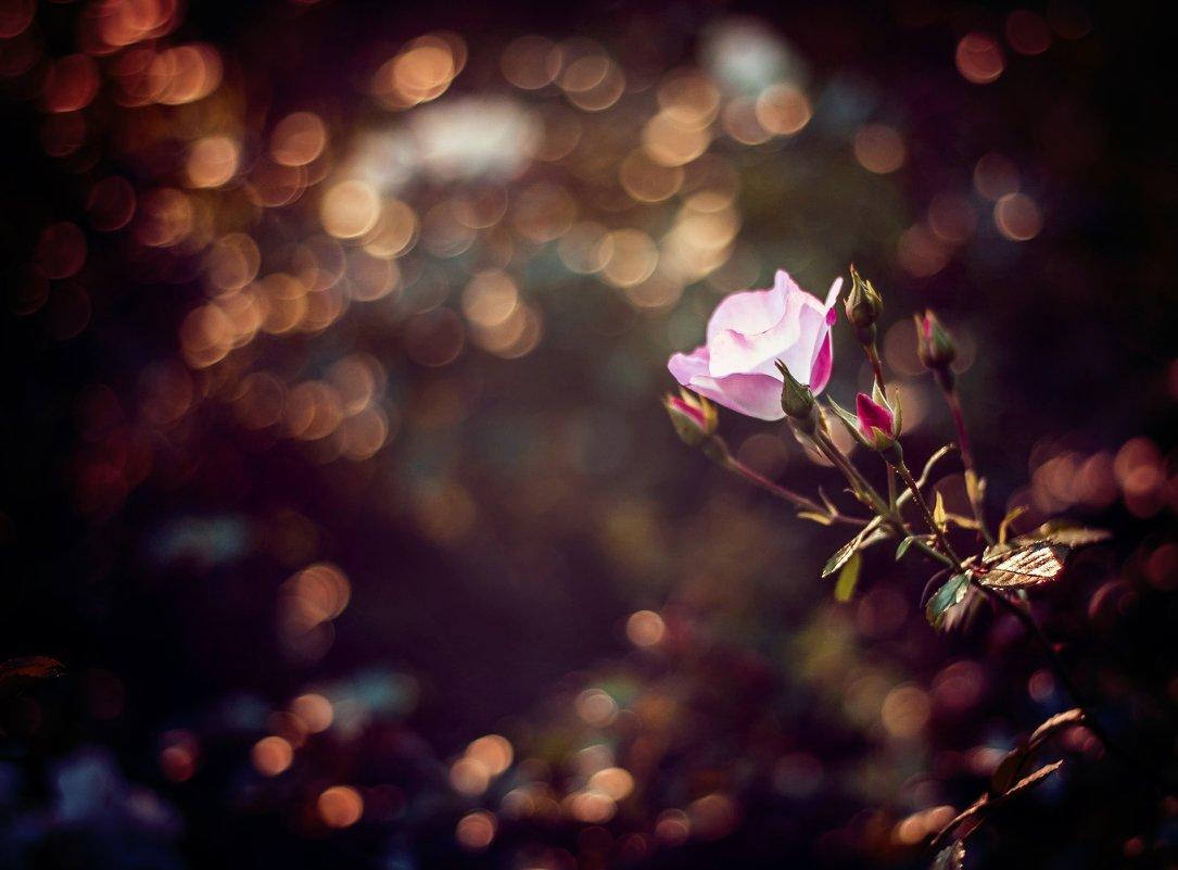 Сколько бы мы ни говорили о пустоте жизни, иногда достаточно лишь одного цветка, чтобы нас разубедит - Larisa