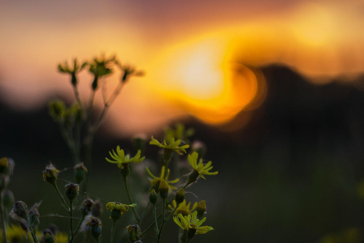 цветы на фоне - Геннадий Свистов