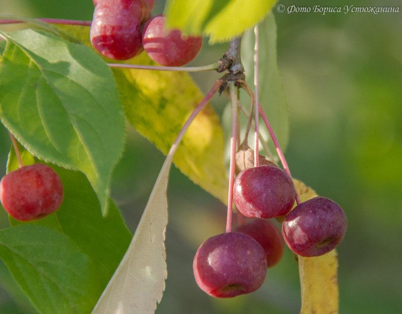 Яблочный спас 2014 - Борис Устюжанин