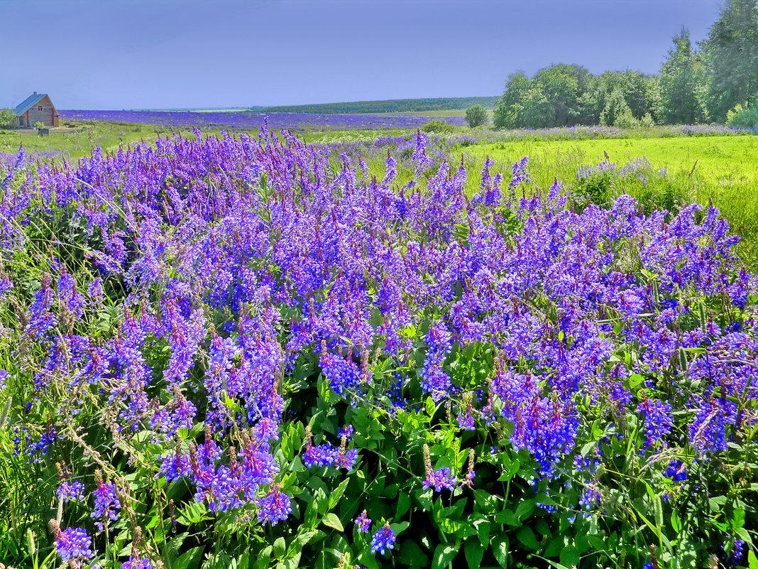 Цветущие поля - Валерий Талашов