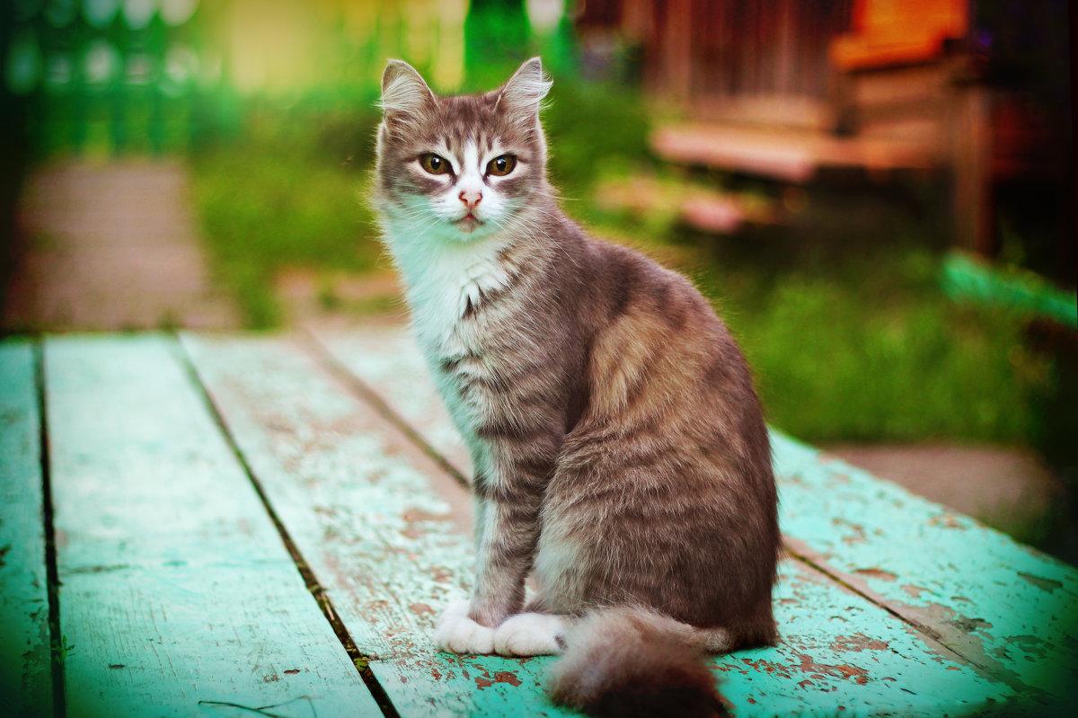 Деревенская кошка - Ирина Трифонова
