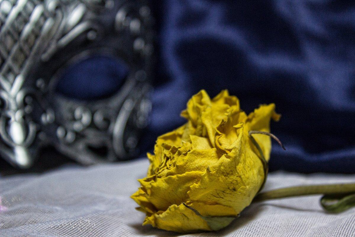 Желтая роза - Mara Vlasova
