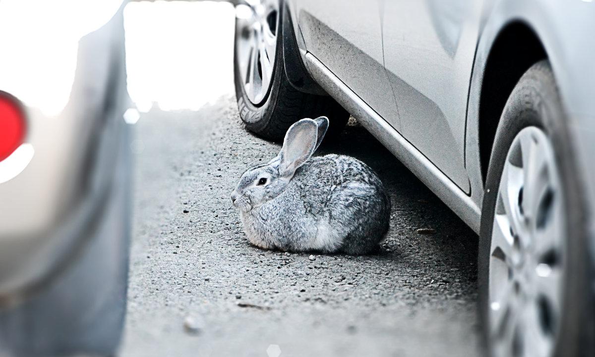 Кролик на стоянке - Андрей Кузнецов