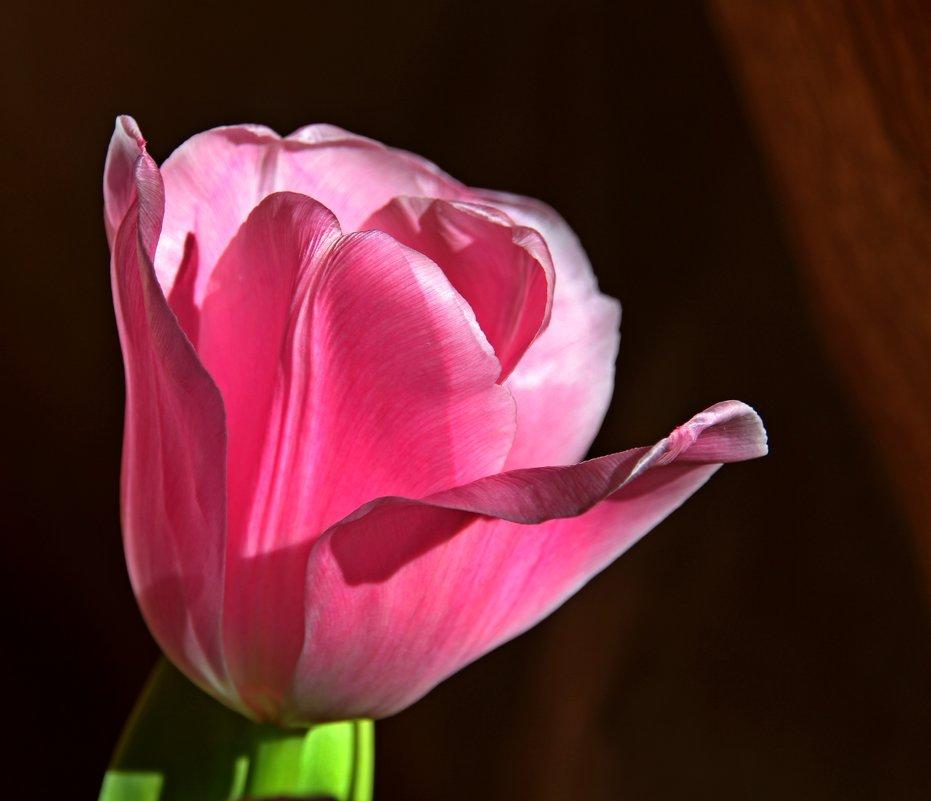 Весенний штрих - leoligra