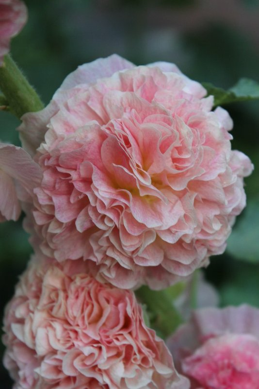 цветочки - Таша Строгая