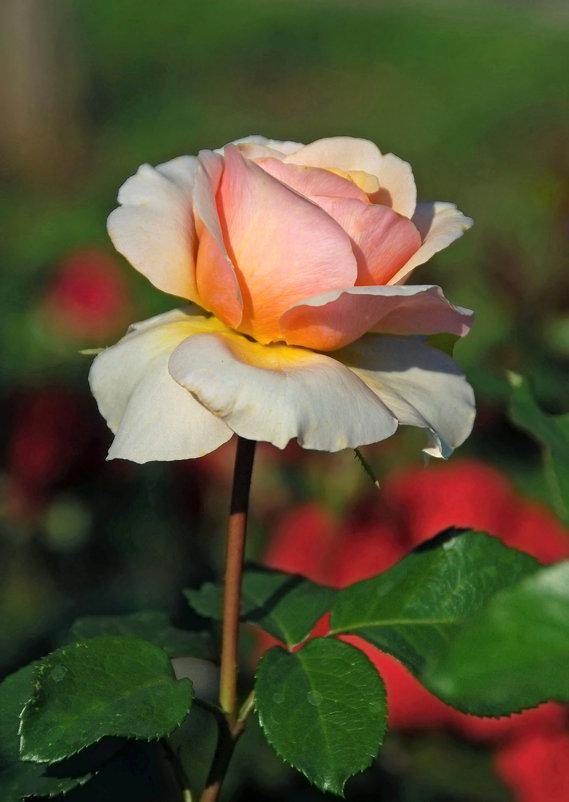 Нежно розовая - НАТАЛИ natali-t8