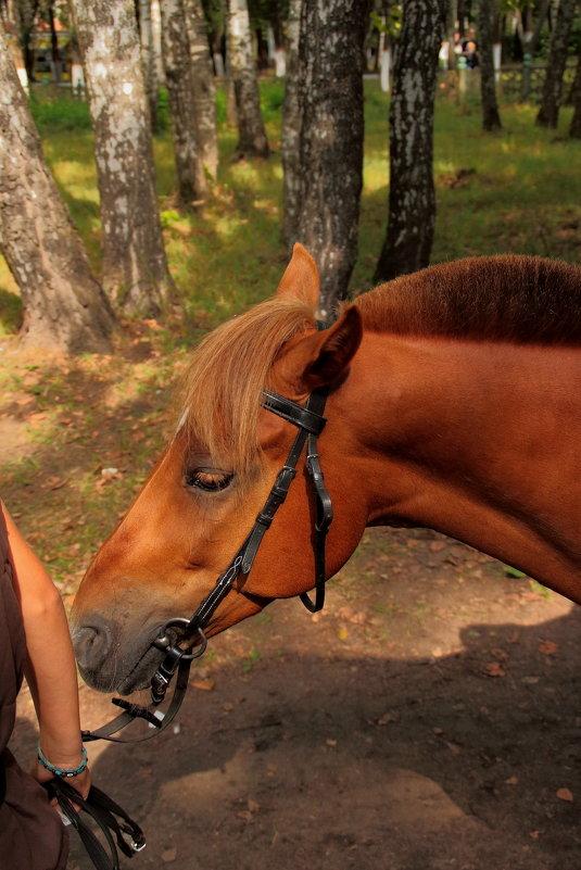 Тянет хозяйка лошадку свою - Екатерина Василькова
