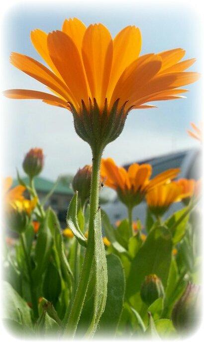 оранжевое небо - Лариса Добрякова