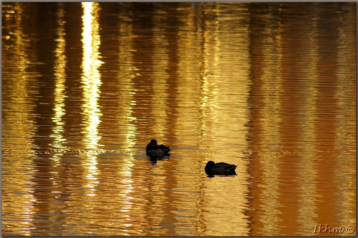 Золотые купания - Igor Khmelev