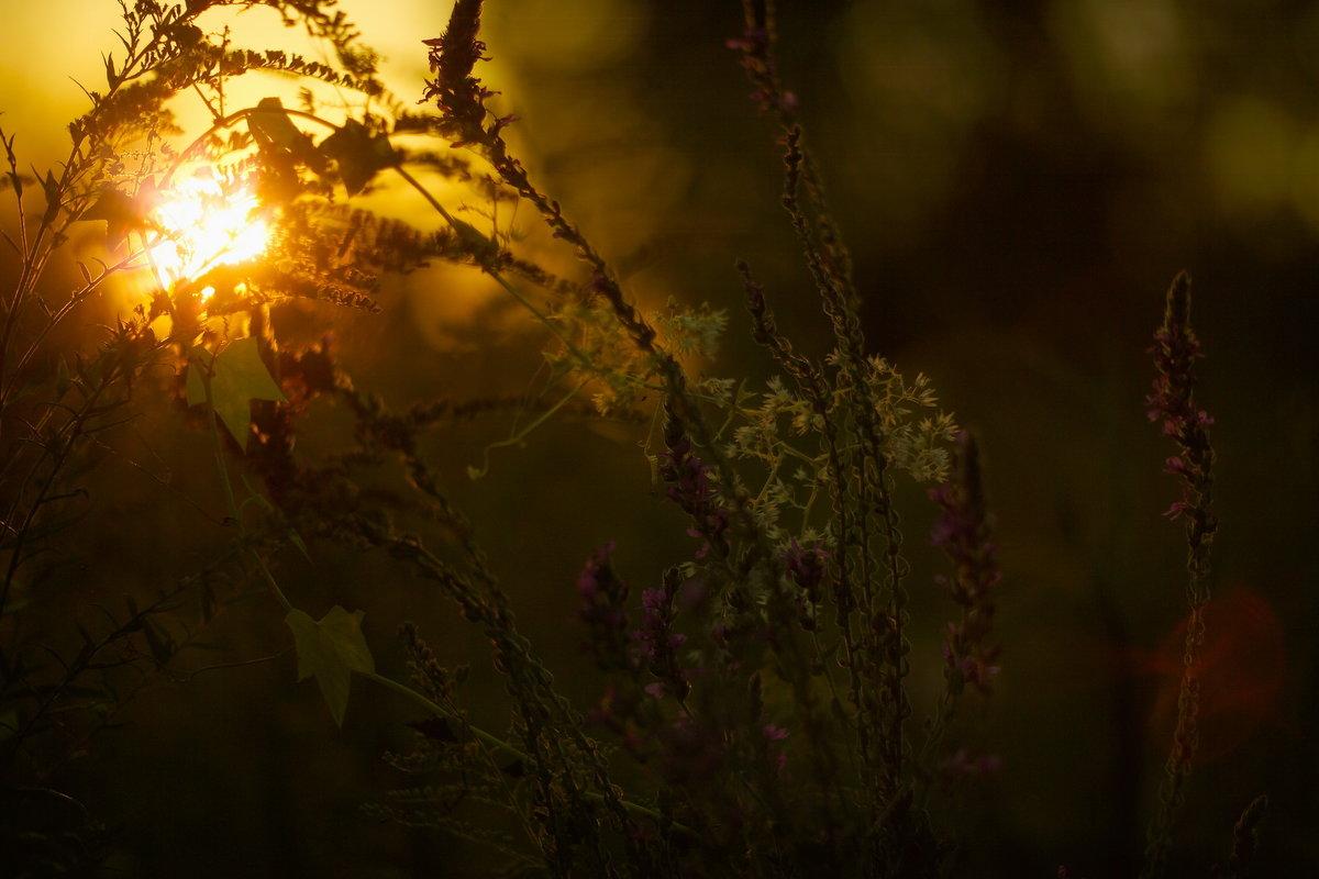 цветі и закат - александр