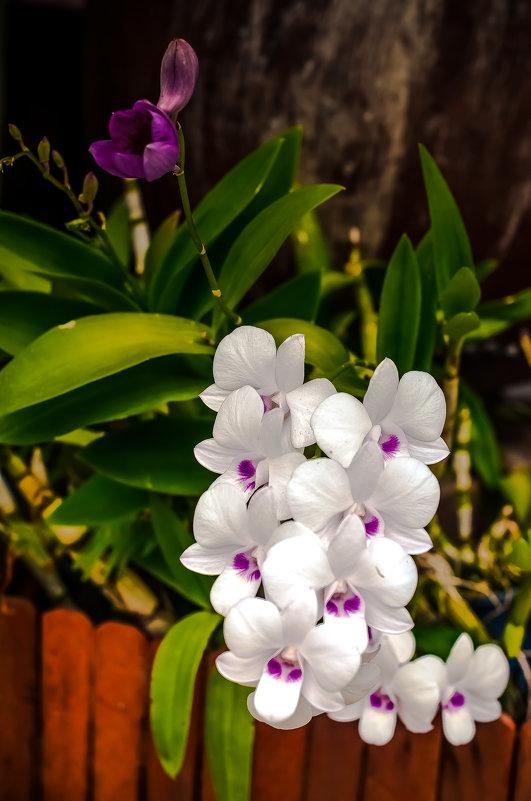 Дикая орхидея) - Ксения Базарова