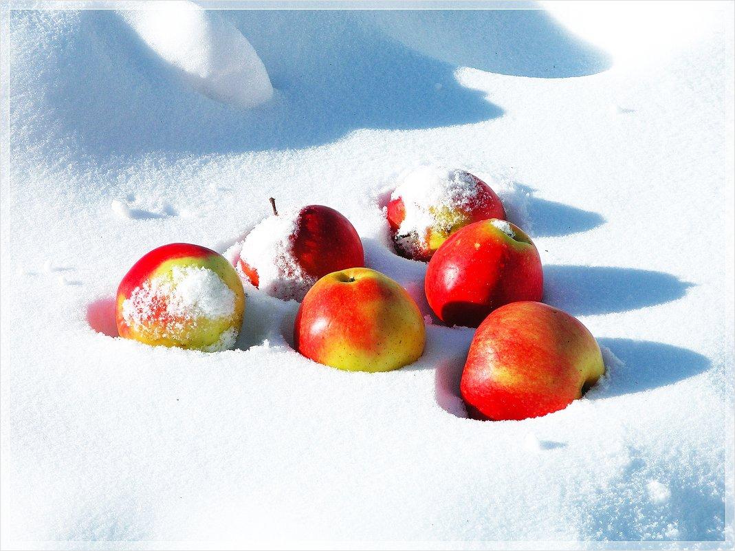 Яблоки на снегу... - Татьяна и Александр Акатов