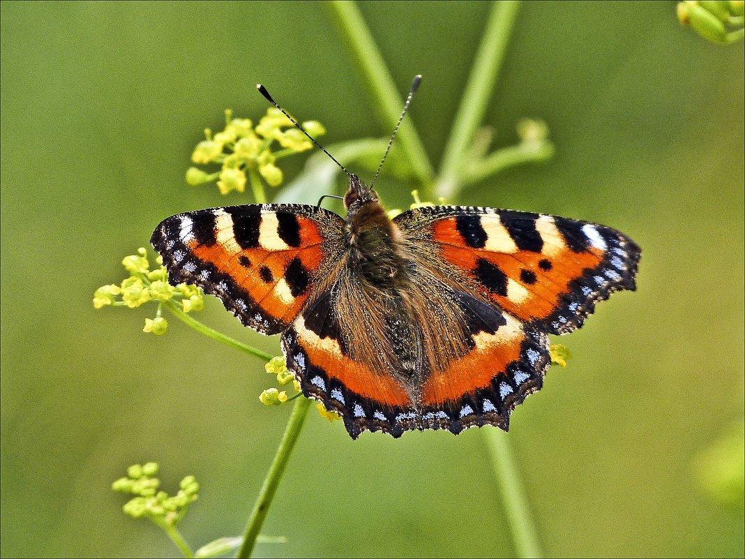 Душа на бабочку похожа - Валентина *