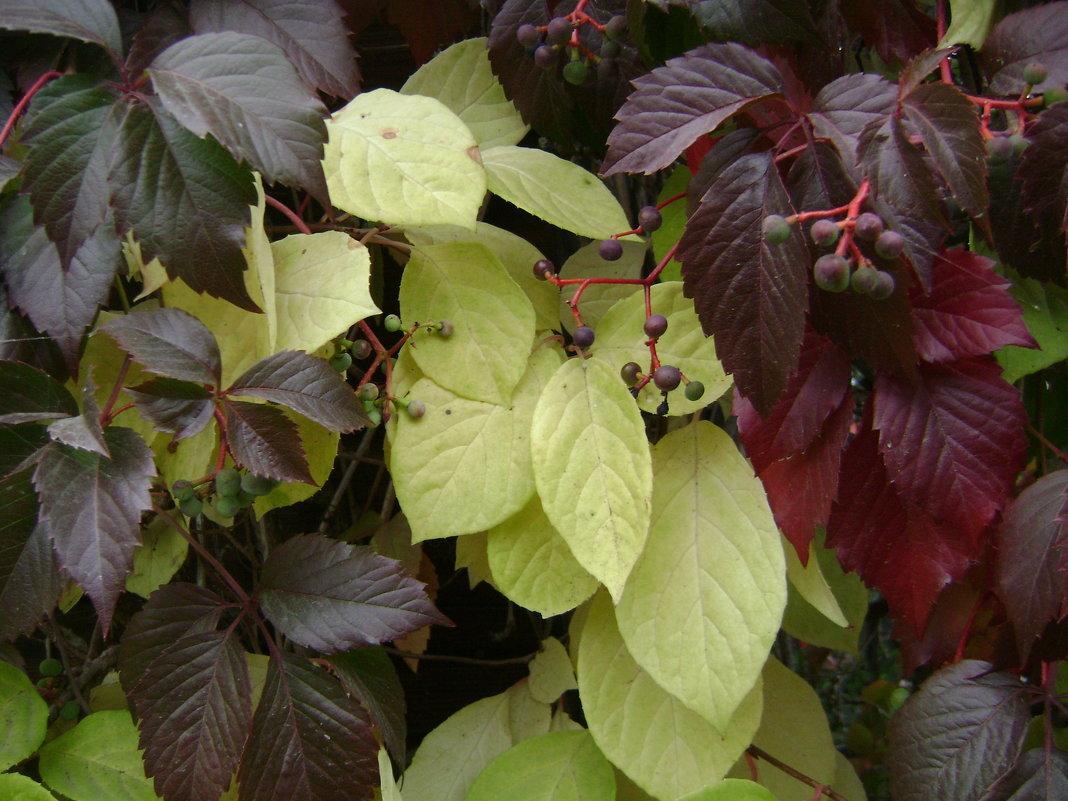 Осенние листья - Анатолий