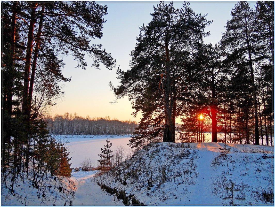 сквозь деревья - Сергей Швечков